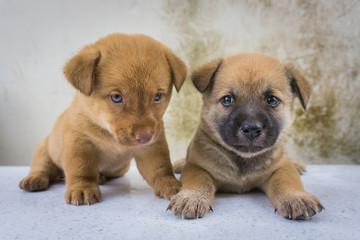 Twin puppies loving