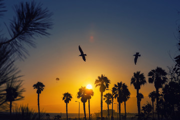 Colorful sunset at Venice beach, Los Angeles, California