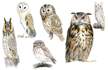 Fotobehang Uilen cartoon Owls
