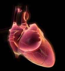 Menschliches Herz mit Herzkranzgefässen, medizinische Illustration, 3D