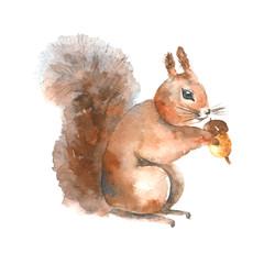 Watercolor squirrel.