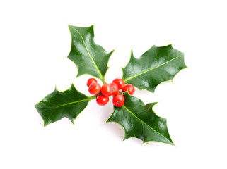 Christmas holiday holly decoration