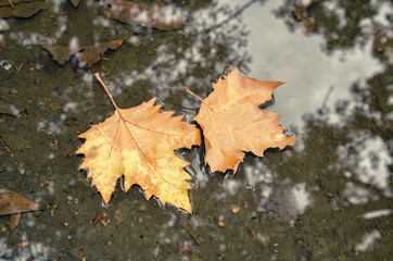 water is autumn leaves