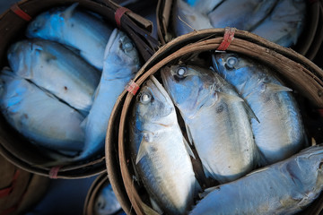 mackerel fish in basket