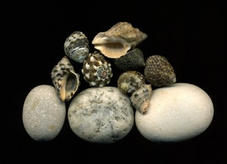 Морские камни и ракушки на черном фоне