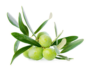 green branch of olive tree with berries is isolated on white bac