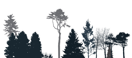 Image of Nature. Tree Silhouette. Eco banner. Vector