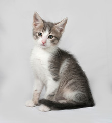 Small white and tabby kitten sitting on gray