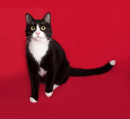 Black and white cat sitting on red