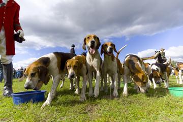 Jagdhunde am Fressnapf