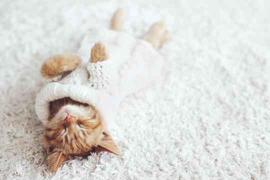 Gigner kitten