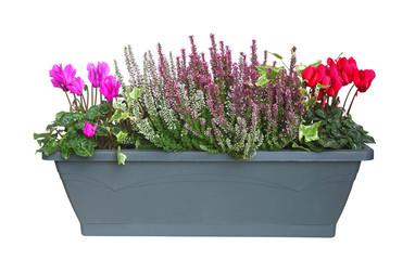Jardinière de plantes d'automne