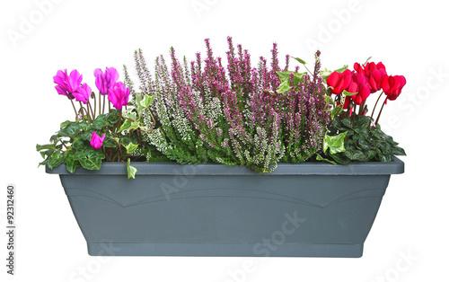 jardini re de plantes d 39 automne photo libre de droits. Black Bedroom Furniture Sets. Home Design Ideas