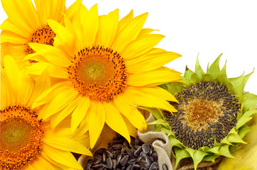 sunflowers and sunflower seeds isolated on white background