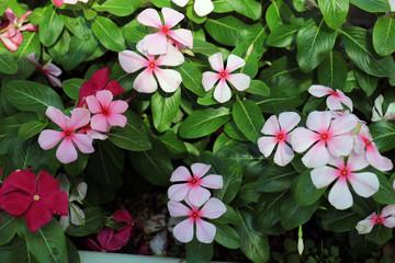 ピンクの花 ガーデン