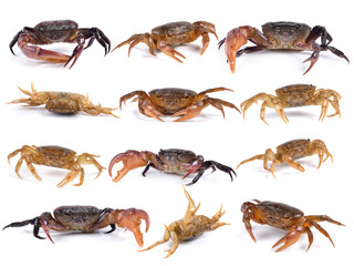 set of crab on white background