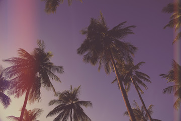 palm trees on the background of a beautiful sunset,light leak filter.