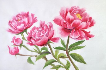 Pink peonies flowers closeup on a rice paper background, asian style painting.