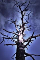 burnt tree near dramatic skies