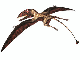 Dimorphodon on White - Dimorphodon was a carnivorous Pterosaur that lived in England during the Jurassic Period.
