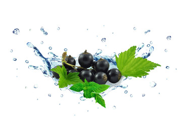 blackcurrant splash