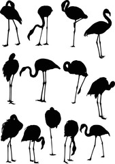 set of thirteen flamingo silhouettes isolated on white