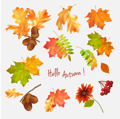 Autumn leaf vector collection