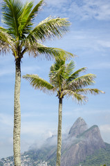 Rio de Janeiro Brazil with palm trees in front of Two Brothers Dois Irmaos Mountain