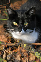 cat in the autumn forest