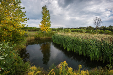 An idyllic pond, surrounded by autumn trees and green grass