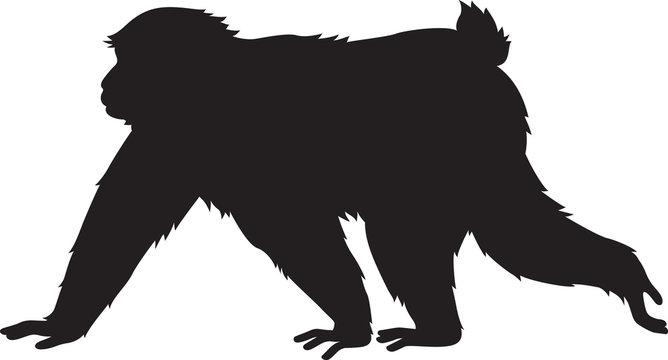 歩く猿 モノクロ シルエット