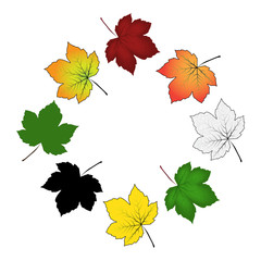 Set of colorful maple leaf . Vector illustration isolated on white background.