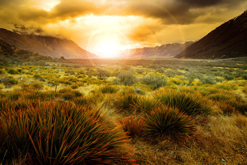 sun rising behind grass field in open country of new zealand sce