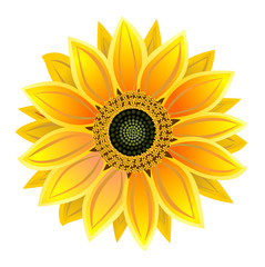 sunflower, realistic illustration vector eps 10