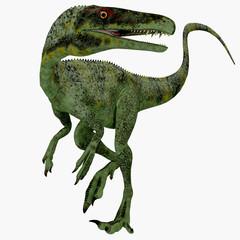 Juravenator Jurassic Dinosaur - Juravenator was a small carnivorous dinosaur that lived in Germany during the Jurassic Period.