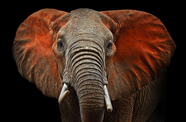 Photo sur Aluminium Elephant Elephants of Tsavo