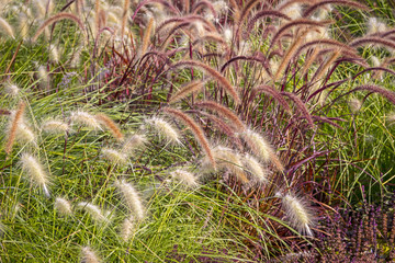 Different Ornamental Grasses.