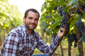 Winemaker in vineyard