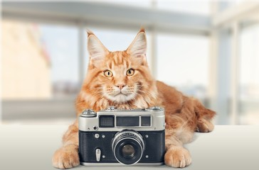 Cat with camera.