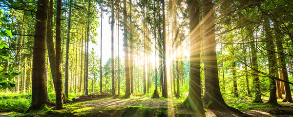 Papiers peints Forets Wald Panorama mit Sonnenstrahlen