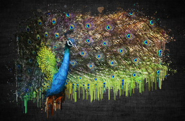 Peacock on dark background. Paint effect