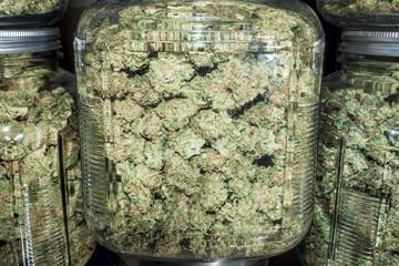 Close Up Glass Jars Filled with Green Marijuana Buds