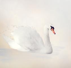 White Swan Watercolor