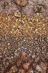 Dry soil surface cracks
