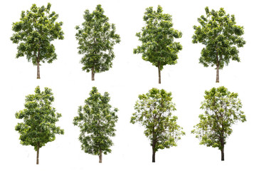 set of eight green trees isolated on white background with clipp