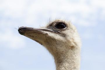 Primer plano de avestruz en contrapicado