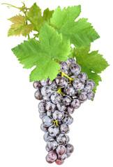 grappe de raisin muscat et feuilles de vigne