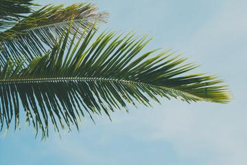 Palm leaf over blue sky background