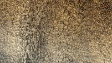 White rhino skin texture background