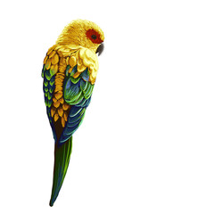 Bright painted parrot